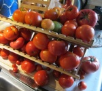 tomatoes Aug 2014